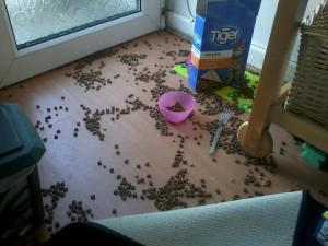 'Reality Pinterest Image 2' - A three-year old's attempt at feeding the cat.